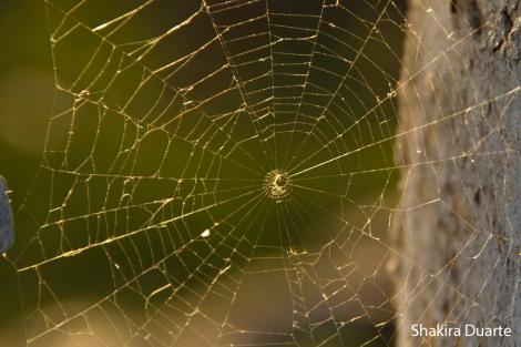 Foto ideas Tela de araña