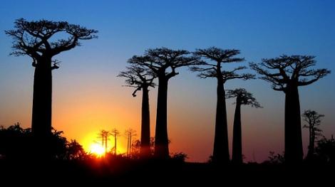 Avenue des Baobab, por Paolo Crosetto