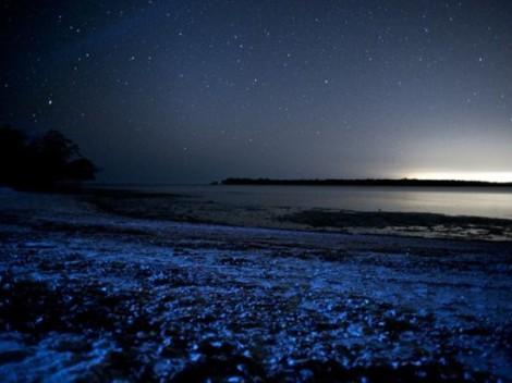 Fitoplancton bioluminiscente, isla Vaadhoo Maldivas